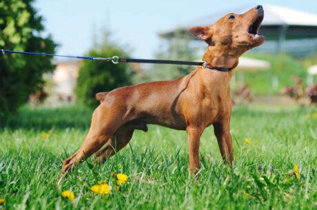 Dog Barking - Training Methods