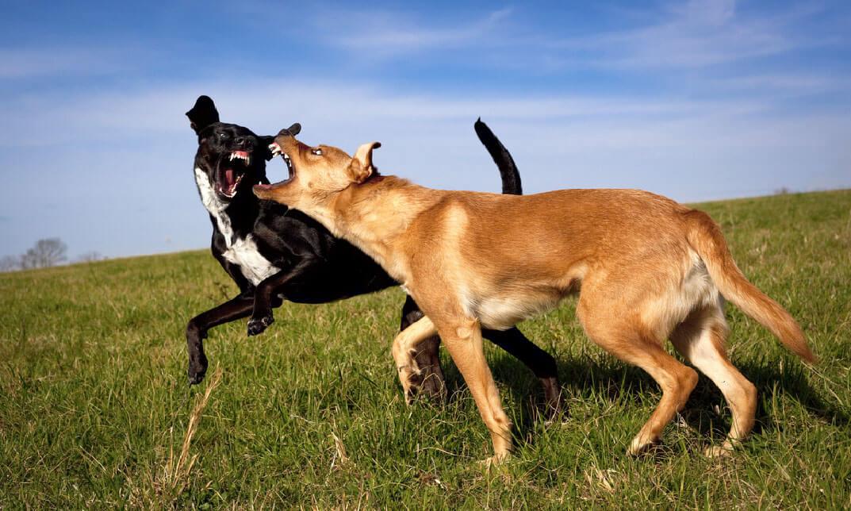 Dog Training - Control Aggressive Dog
