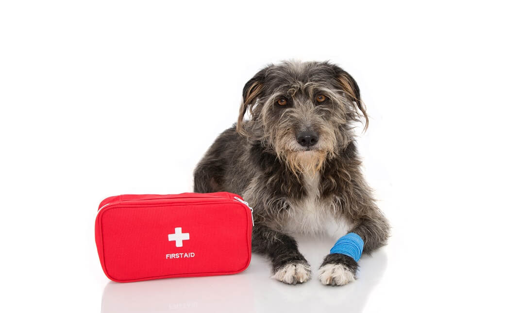 Canine First Aid (Emergency Care)